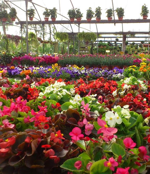 Floristeria la fuente for Viveros de plantas en concepcion